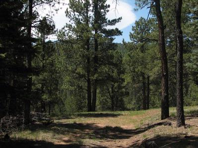 Lot 24 A & B Taos Pines Ranch